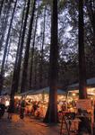 メタセコイアの林が披露宴会場に