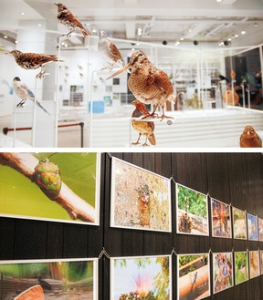 外向きに展示された標本(上)、生田緑地の四季だより