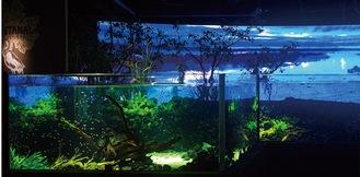 映像技術を使って生態系を紹介するコーナー