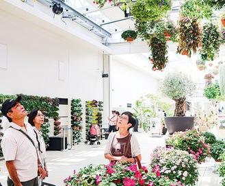 さまざまな鉢が並ぶ温室
