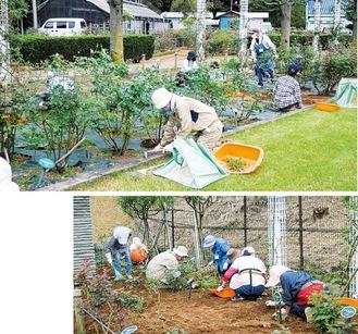 一般開放開始前日、除草作業を行うボランティアメンバー=14日