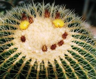 笑うように並ぶ黄色い花とつぼみ=4月1日