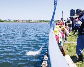 宿河原で、ホースを使って稚魚を多摩川へ放流