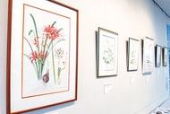 精密に描く 植物画