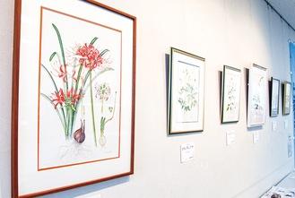 館内で展示中の植物画