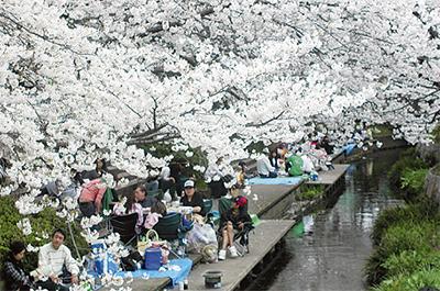 4月1日桜まつり