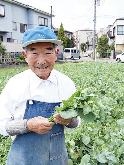 のらぼう菜収穫佳境に