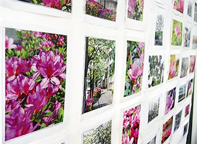 長沢の花を題材に写真展
