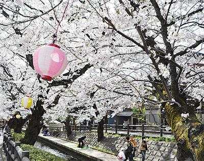 宿河原で桜まつり