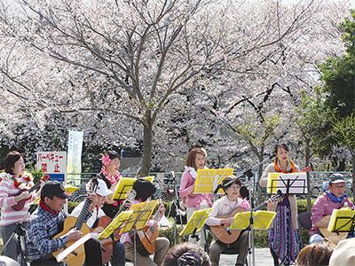 せせらぎ館で桜コンサート
