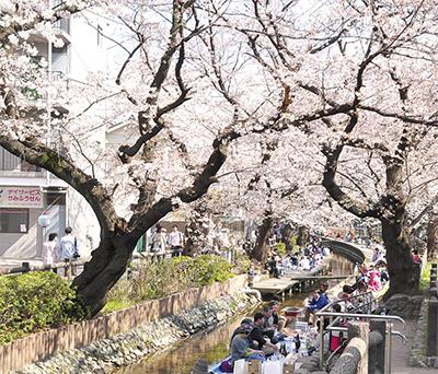 桜ほころび花見客賑わう