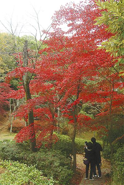 生田緑地、秋色深まる