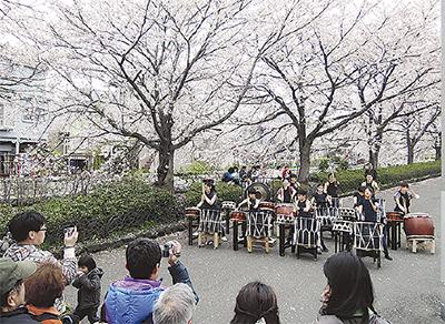 登戸台和で桜まつり