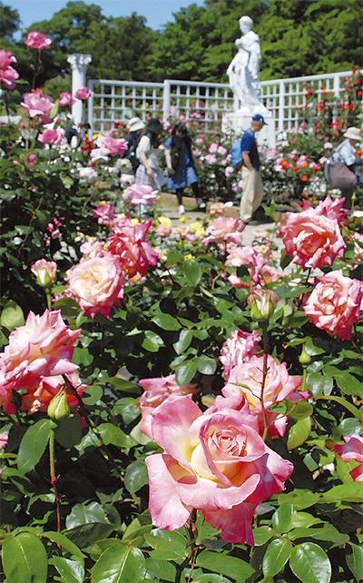 大輪のバラ咲き競う