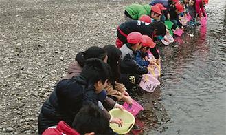 稚魚を放つ児童たち