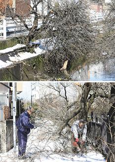 折れた枝が二ヶ領用水や道路を塞いだ