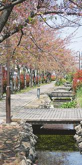 わずかにピンク色が残る遊歩道(4月12日撮影)
