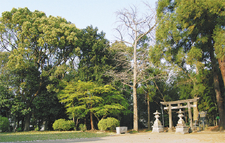 新たに保全地域となった杉山神社(多摩区)