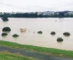 水没した多摩川