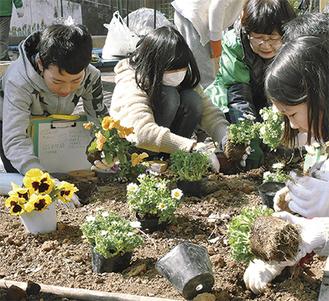 花壇に花苗を植える児童ら