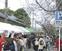 名物、小杉の花見市