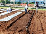 福祉交流農園(川崎市経済労働局農業振興課より提供)