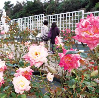 午前中の香り立つバラを楽しむ来苑者=15日