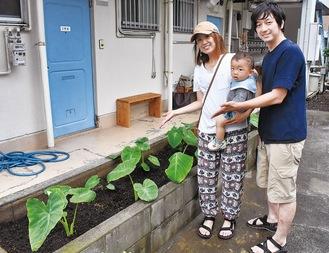 花壇で育てる里芋と育成を管理する片山夫妻