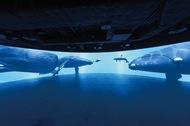 イルカやクジラを紹介