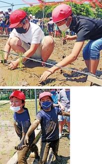 手足や顔を泥で汚しながら田植えを楽しんだ同校5年生の児童ら