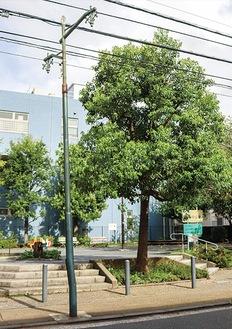 今井南町の通りに残された街路灯