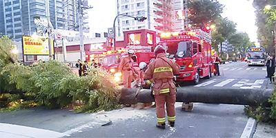 小杉倒木事故の対応急ぐ