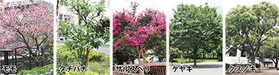 「区の木」を決めよう