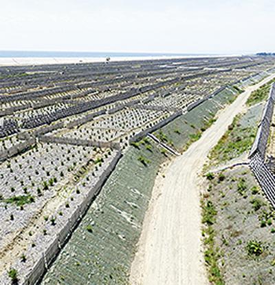 津波で失った海岸林を再生