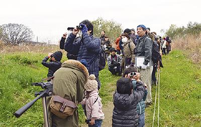 多摩川の野鳥を観察