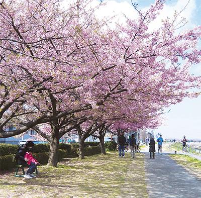 活動の集大成に桜まつり