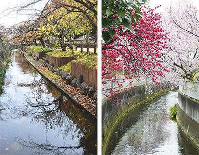 写真でみる二ヶ領の四季