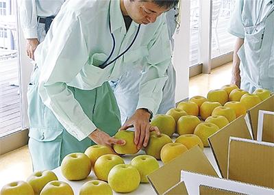 梨・ぶどう品評会