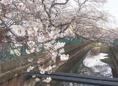 桜の下で初のフェス