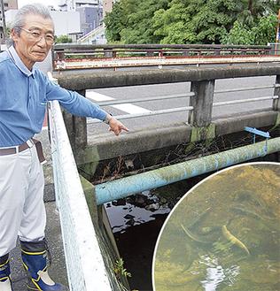鈴木さんが鮎数匹を確認した柿生新橋付近。晴れの日には苔を求めて鮎が姿を現す(右下写真=23日撮影)