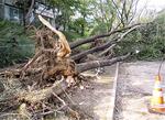 数本の倒木が見つかった虹ヶ丘公園