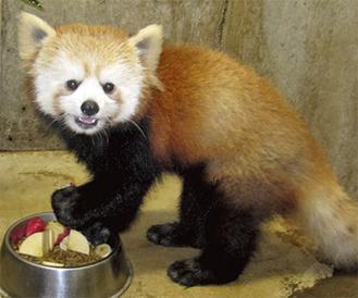 まもなくお披露目される「アン」 提供:夢見ヶ崎動物公園