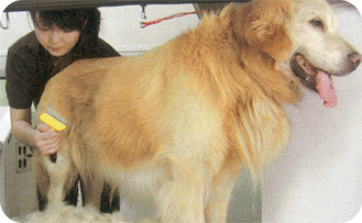 ワゴン内は大型犬もラクラクの広さ。2頭同時も可能