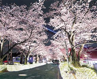 遊園地を彩る桜
