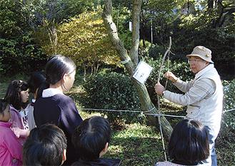 マユミという木を紹介するボランティア