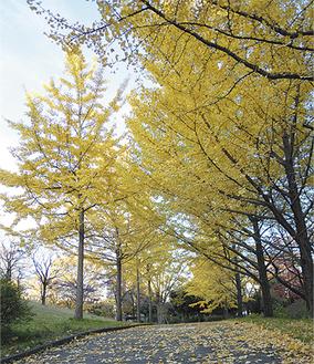 黄色いトンネルが続く虹ヶ丘公園