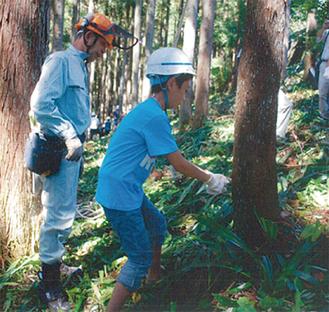 間伐を体験する参加者(昨年の様子)