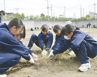 協力して作業する女子生徒たち