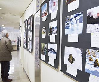 市民館に展示されている写真