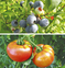 「農ガール」で区の魅力活性